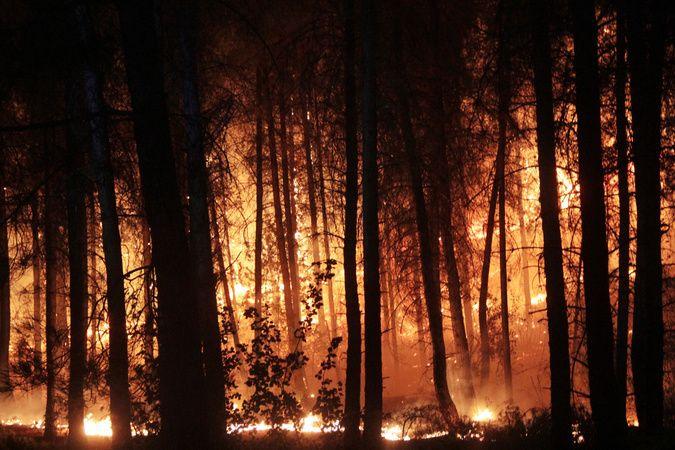 Seydikemer'de orman yangını çıkardığı iddiasıyla yakalanan zanlı tutuklandı
