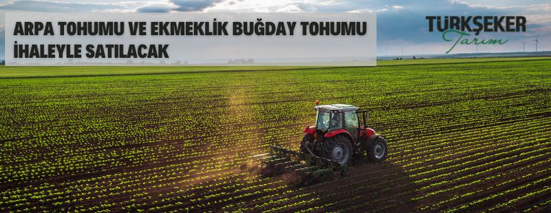 Türkşeker Tarım A.Ş.'den arpa tohumu ve ekmeklik buğday tohumu satış ihalesi