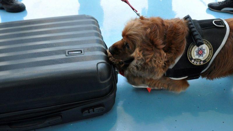 """Yolcunun valizindeki uyuşturucuyu """"Koko"""" buldu"""