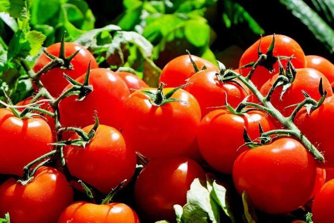 Türkiye Rusya'ya 300 bin ton domates ithal edecek