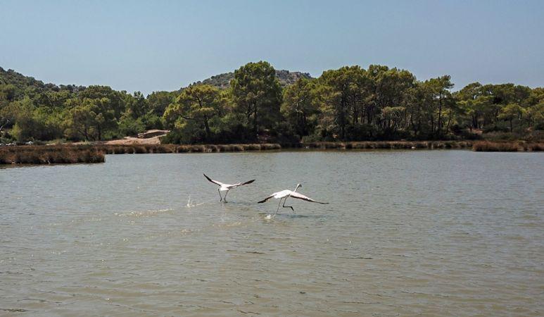Noel Baba Kuş Cenneti'ne flamingolar bu yıl erken geldi
