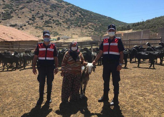 Kayıp keçi sürüsü bulundu