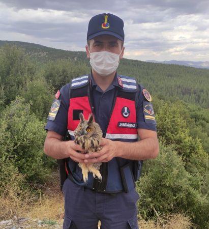 Jandarma, yaralı baykuşu kurtardı