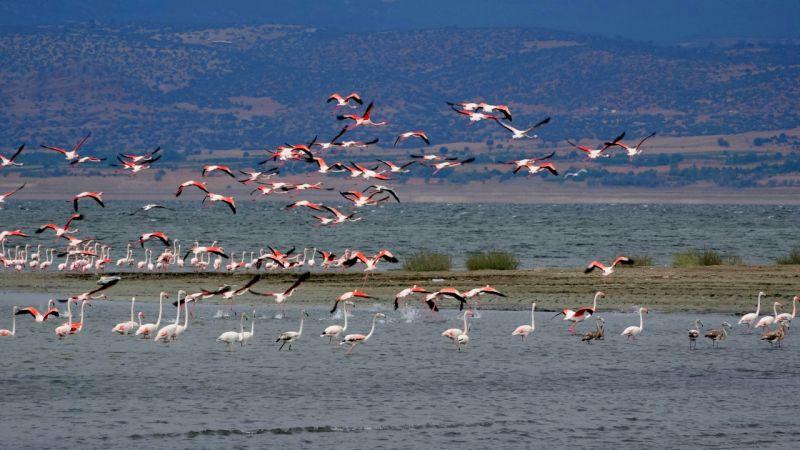 Flamingolar, suyu azalan Burdur Gölü'nde