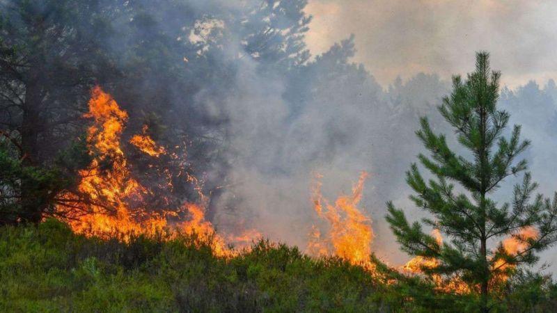 Kastamonu'da orman yangını çıktı