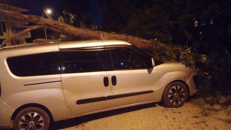 Ağaç park halindeki aracın üzerine devrildi