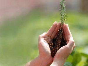 TEMA'dan Şardağı ağaçlandırma projesine destek