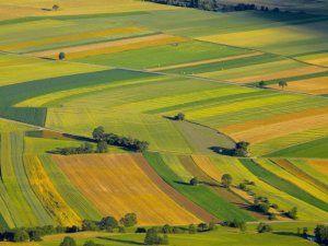 Elbistan'da, 10 bin dönüm hazine arazisi için 550 çiftçi başvuru yaptı
