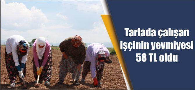 Tarlada çalışan işçinin yevmiyesi 58 TL oldu