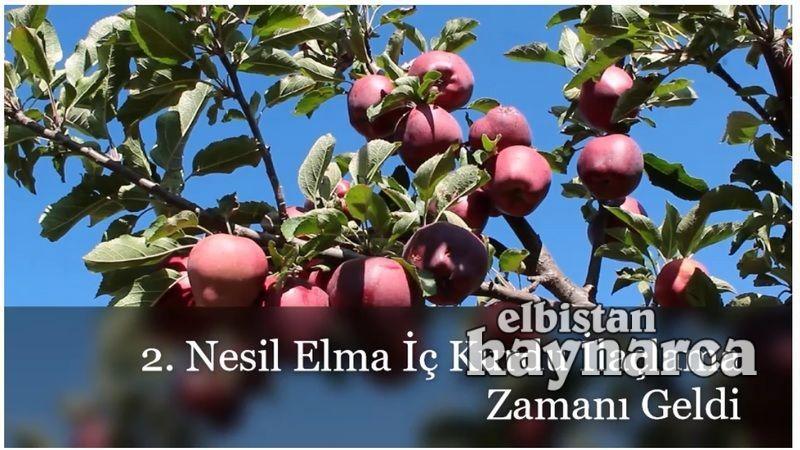 Üreticilere elma iç kurdu 2.nesil ilaçlama hatırlatması