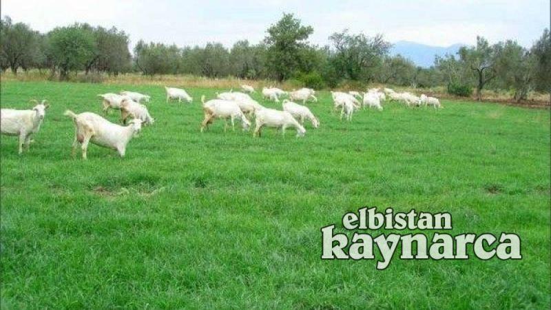 Elbistan ve Nurhak'ta meralar ıslah edilmek şartıyla kiralanacak