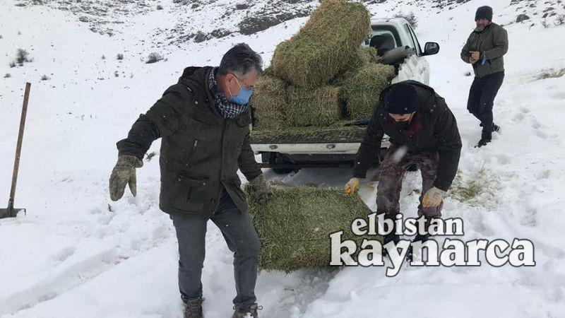 Yaban keçileri için yem bırakıldı