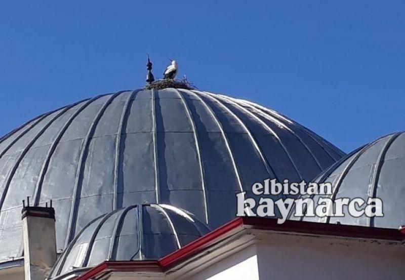 Caminin 15 yıllık misafiri geri döndü