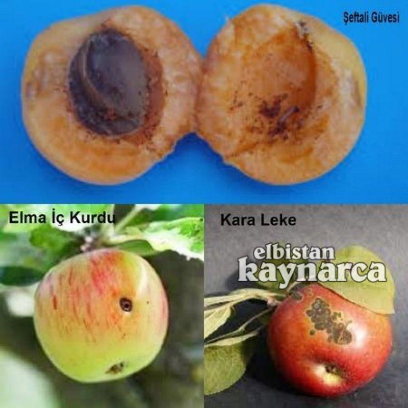 İlçe Tarım'dan üreticilere meyve ağaçlarında ilaçlama çağrısı