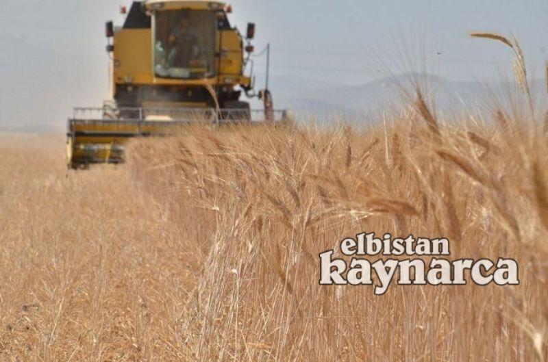 Elbistan çiftçisi hasat için tarlada