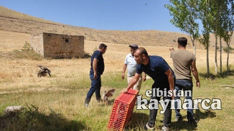 33 mahallede 800 kınalı keklik doğaya kanat çırptı