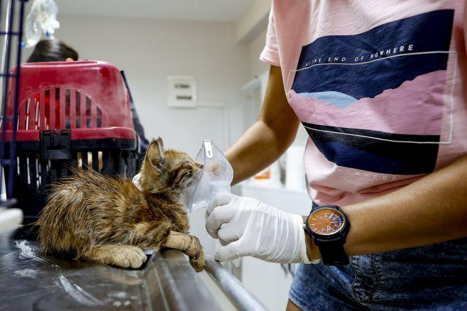 Gönüllü dört veteriner, Manavgat yangınında yaralanan hayvanlar için seferber oldu