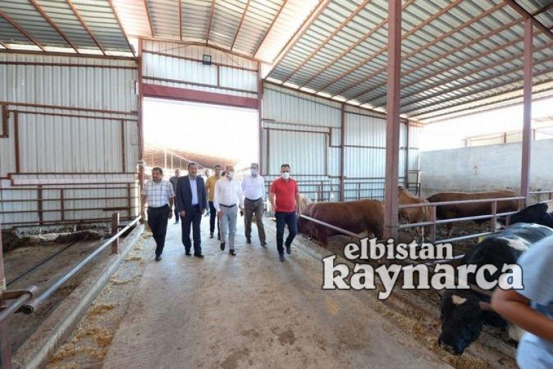Vali Yardımcısı Özkan, tarım ve hayvancılık işletmelerini ziyaret etti