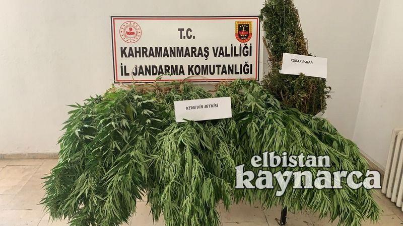 Jandarma, 3 kilo esrar ve 28 kök kenevir ele geçirdi