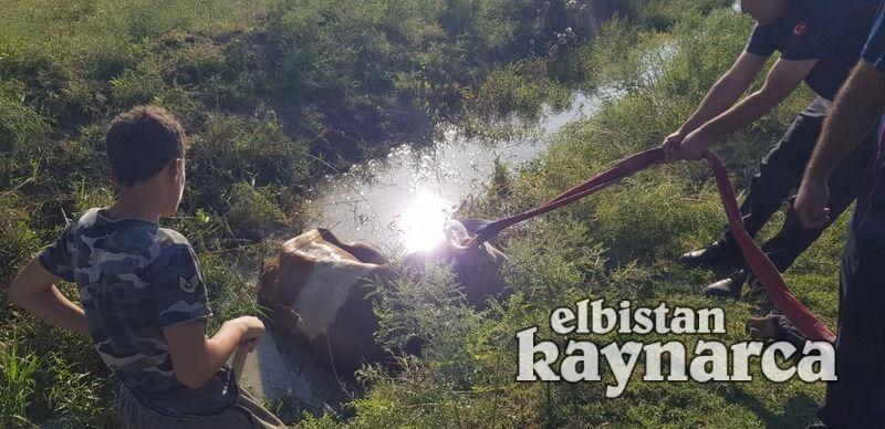 Çamura batan inek, itfaiye tarafından kurtarıldı