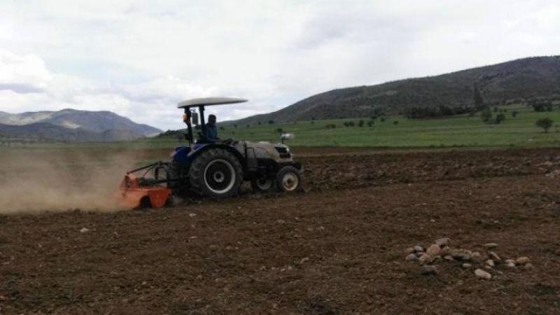 Organik siyez buğdayının üretim alanı genişletilmeye başlandı