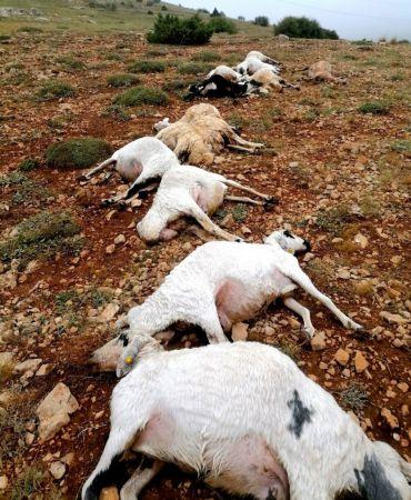 Giresun'da 16 koyun yıldırım düşmesi sonucu telef oldu