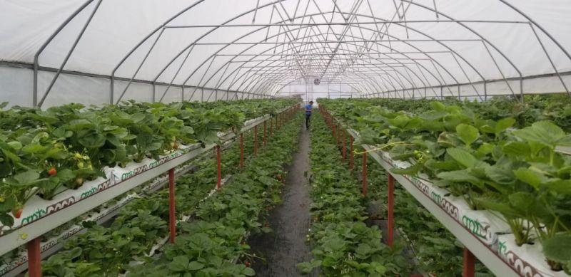 Giresun'da yürütülen tarımsal projeler yüz güldürüyor