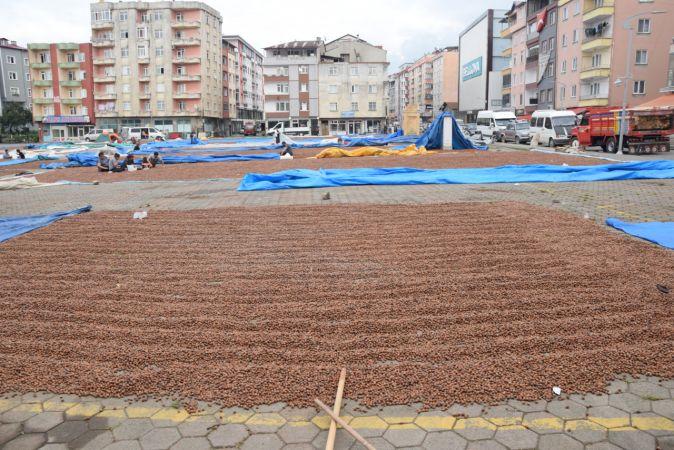 Espiye'de halk pazarı fındık harmanı oldu