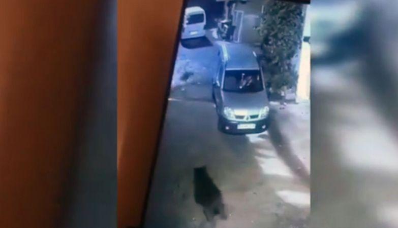 Giresun'da aç kalıp mahalleye inen ayı güvenlik kamerasına takıldı