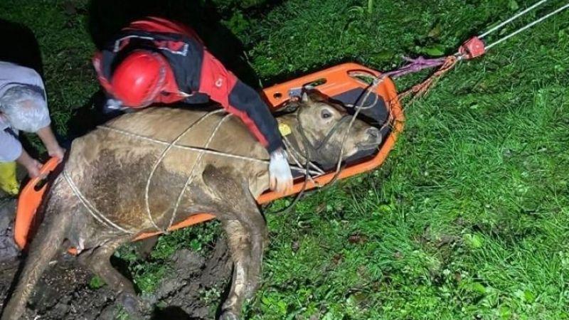 Giresun'da uçuruma düşen inek kurtarıldı