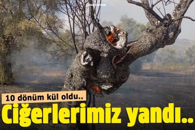 Karpuzlu'da 10 dönüm zeytinlik alan yangında zarar gördü