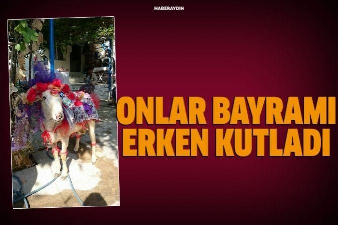 Aydın'da koç süsleyiciler erken bayram yaptı