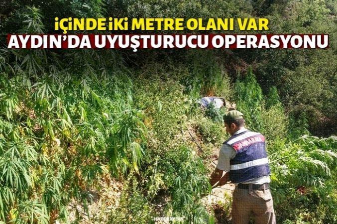Jandarma ormanlık alanda oluşturulan zehir tarlasını imha etti