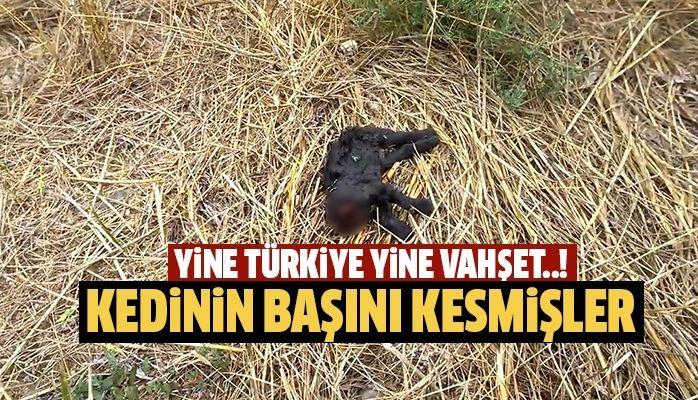 Yine Türkiye yine vahşet.!