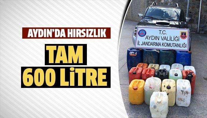 Aydın'da hırsızlık