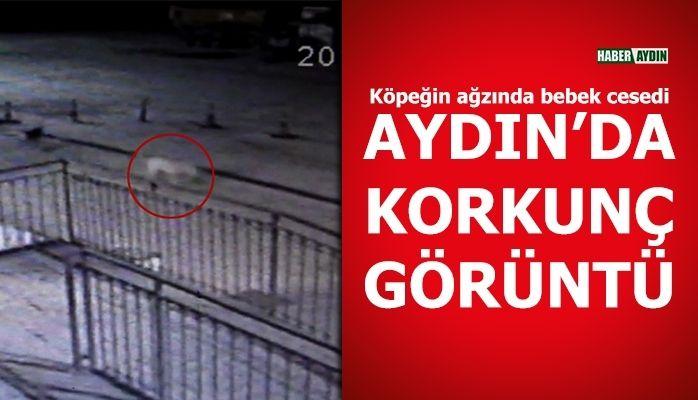 Aydın'da korkunç görüntü.. Görenlerin kanı dondu