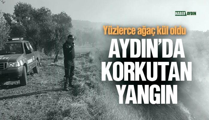 Aydın'da arazi yangını
