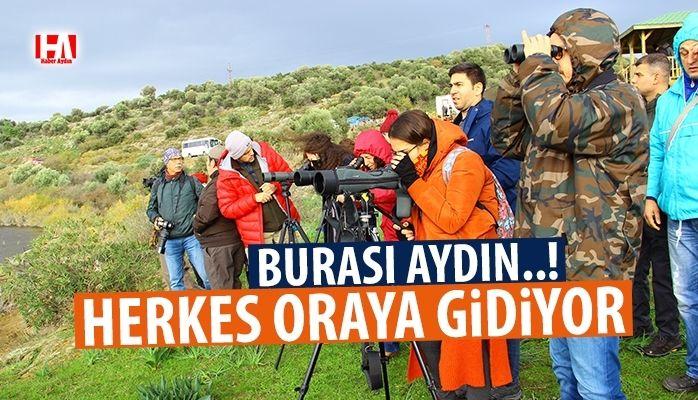 Aydın'da kış turizmi değil kuş turizmi başladı