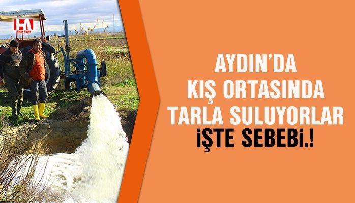 Aydın'da kış ortasında tarla suluyorlar