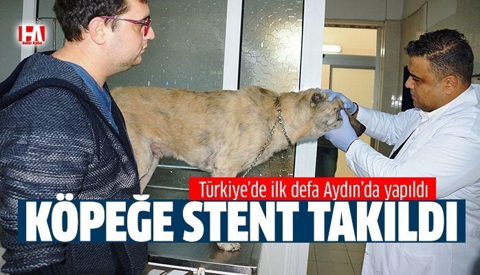 Türkiye'de ilk defa Aydın'da yapıldı
