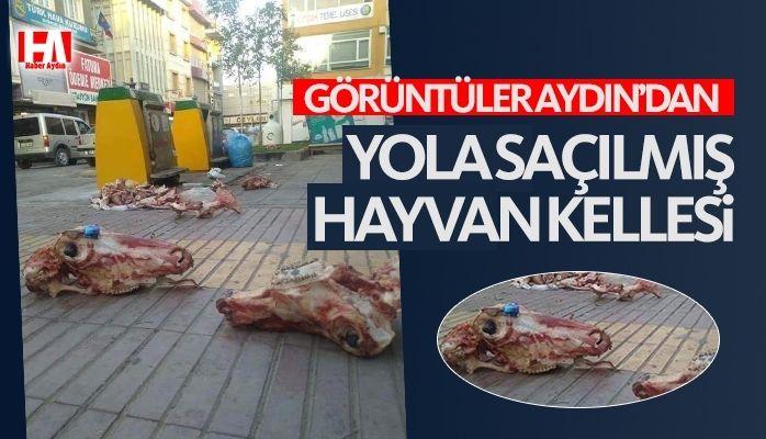 Aydın'da yola saçılmış hayvan kellesi