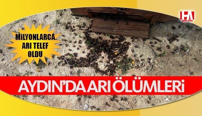 Aydın'da arı ölümleri