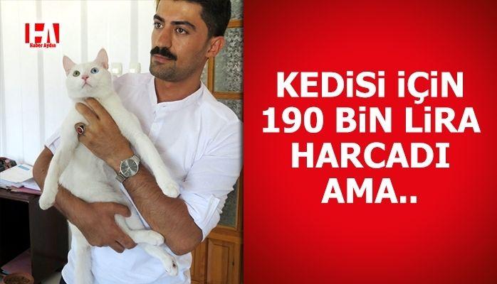 Kedisi için 190 bin lira harcadı ama..