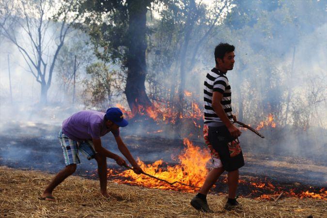 Muğla'da tarım arazisinde yangın