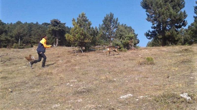 Kaybolan zihinsel engelli adamı iz takip köpeği buldu