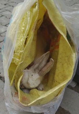 Manisa'da boynu kesilerek çöpe atılan tavşan tedavi altına alındı
