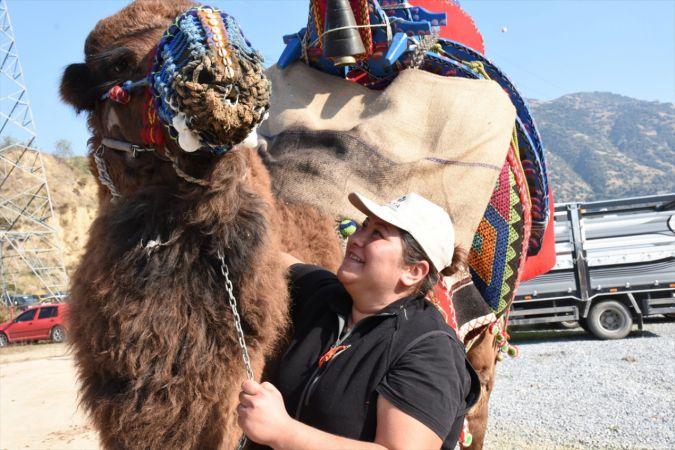 Aydın'da deve güreşi festivali düzenlendi