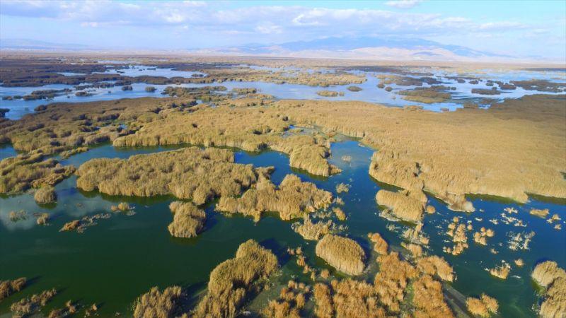 Eber Gölü'nde su seviyesi düşüyor
