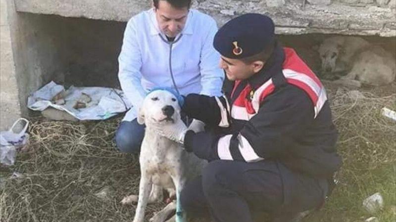 Manisa'da çuvallara konmuş halde bulunan köpekler tedavi altına alındı