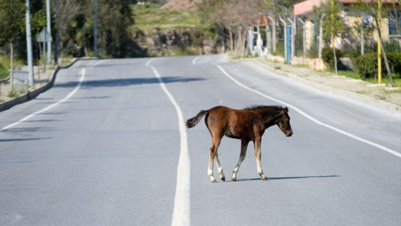 İzmir'de mahalleye gelen başıboş atlar ilginç görüntü oluşturdu